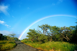 o-RAINBOW-HAWAII-900.jpg