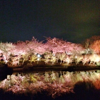 kawazusakura (320x320).jpg